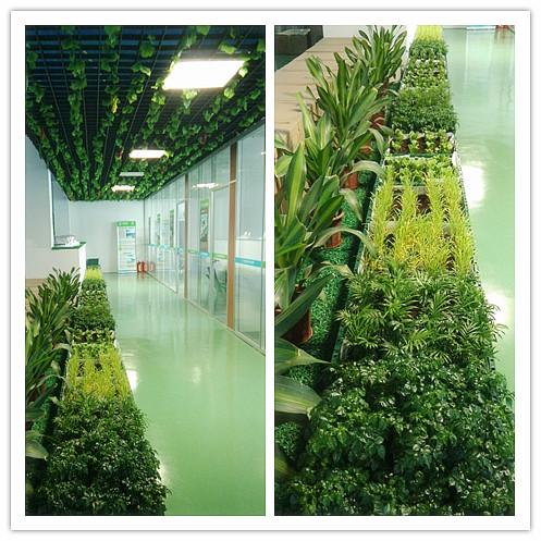 香港正千赢国际娱乐app下载植物长廊